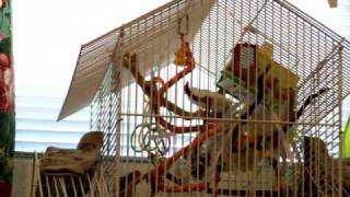 youtube-finches1